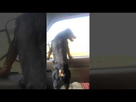 Jak nie należy podróżować z psem?
