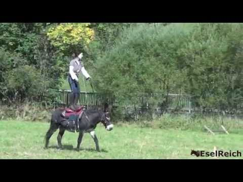 Trick Riding with Donkey