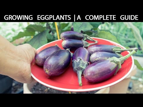 Organic Horticulture Tips To Help You Ditch The Toxic Garden Chemicals