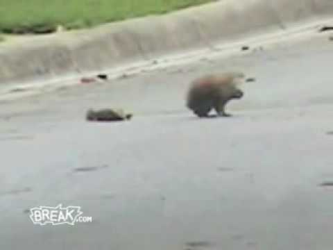 Increible! Ardilla vs Cuervos