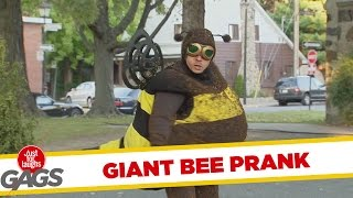 Giant Bee Prank