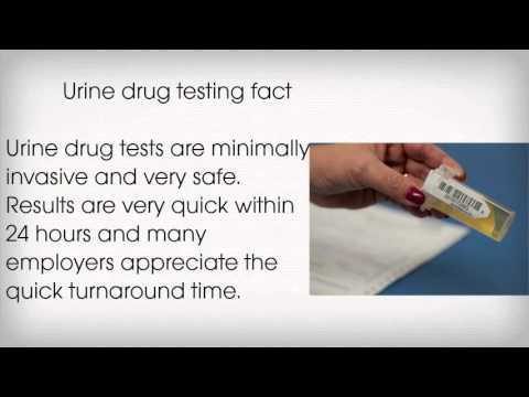 how to do a 24 hr urine test