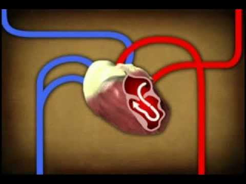 Download The Circulatory System HD Mp4 3GP Video and MP3