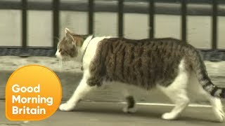 Larry the Cat 'Abandons' Theresa May!   Good Morning Britain