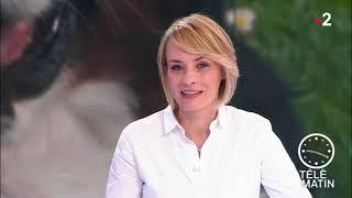 Reportage France 2 – Télématin 22-04-2019 cynophobie