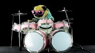 فيديو طريف لكلب يلعب على الدرامز بمهارة