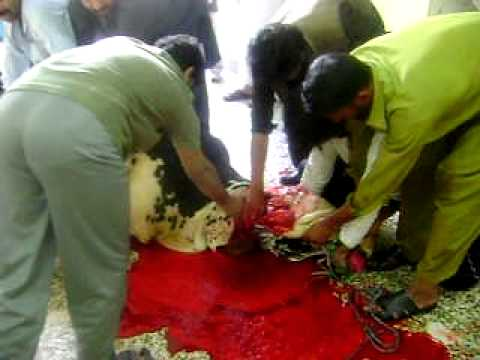 qurbani2 - bangush colony Rawalpindi 2011.