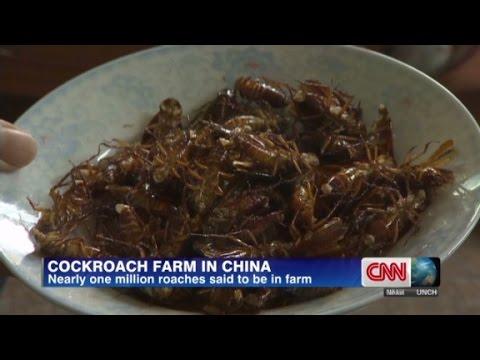 CNN直擊蟑螂養殖場 老闆:生吃也好吃!不吃後悔終生