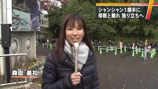 上野の新パンダ舎は6頭分に面積倍増設計図を独自入手!