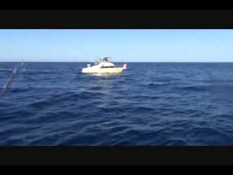 Mysterious 300 Pound (136 Kg) Fish Caught in Cabo, Then Stolen