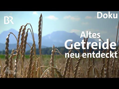 Vergessene Getreidesorten - aus alt mach neu? | Schwabe ...