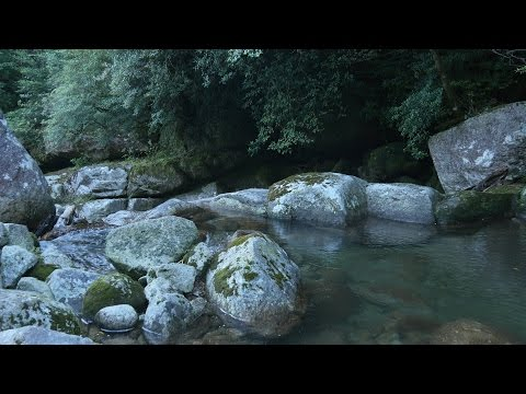 KAGOSHIMA Energetic Japan ?Forest Stream – Nature Sound & 4K