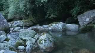 KAGOSHIMA Energetic Japan ?Forest Stream – Nature Sound & 4K