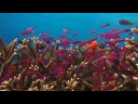 Wakatobi Dive Resort UW video 2007