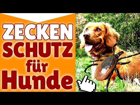 Zeckenschutz für Hunde ! Denke jetzt an den Zeckensch ...