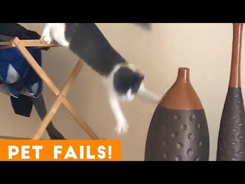 Funny animals - TRY NOT TO LAUGH FUNNIEST PET FAILS AUGUST 2018  Funny Pet Videos