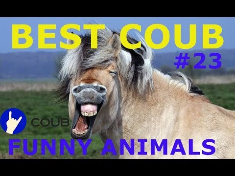 BEST COUB ЖИВОТНЫЕ #23  COUB FUNNY ANIMALS