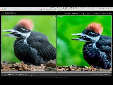 High Noise Workflow (Using Lightroom, Topaz Denoise and On1 Effects)