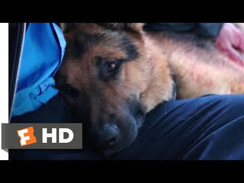 A Dog's Purpose (2017) - I Need To Rest Scene (5/10) | Movieclips