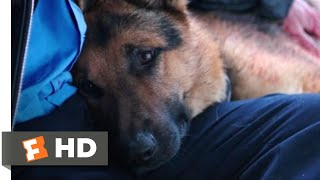 Nonton A Dog S Purpose  2017    I Need To Rest Scene  5 10    Movieclips Film Subtitle Indonesia Streaming Movie Download