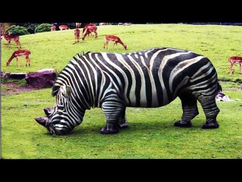 20 Bizarre Hybrid Animal That Actually Exist