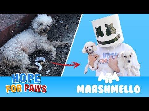 Animal Rescue Compilation