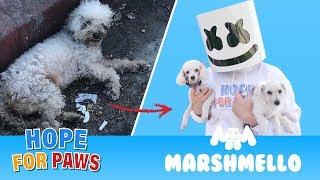 Video Marshmello ft. Hope For Paws - HAPPIER together compilation. MP3, 3GP, MP4, WEBM, AVI, FLV Februari 2019