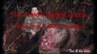 Video The World's Biggest Grizzly Bear MP3, 3GP, MP4, WEBM, AVI, FLV Juli 2017