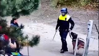 Pies potrafi rozpoznać, kto jest dobry, a kto zły…