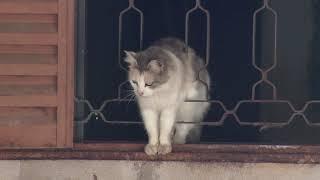 Vizinhos pedem  ajuda para retirar  gatos de casa em Agudos