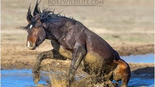 Nonton Closeup Wild Horses    Real Close     Film Subtitle Indonesia Streaming Movie Download