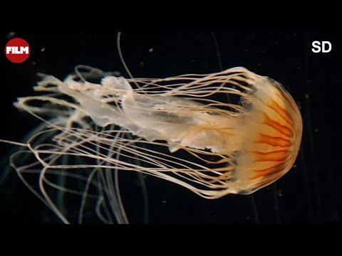 Narodziny oceanu - Origins Of Life