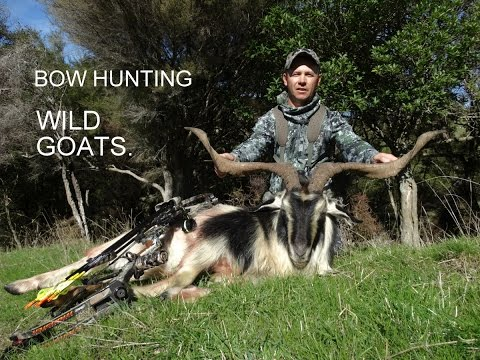 Bow Hunting New Zealand Wild Goats. Featuring 2014 Mathews Chill R