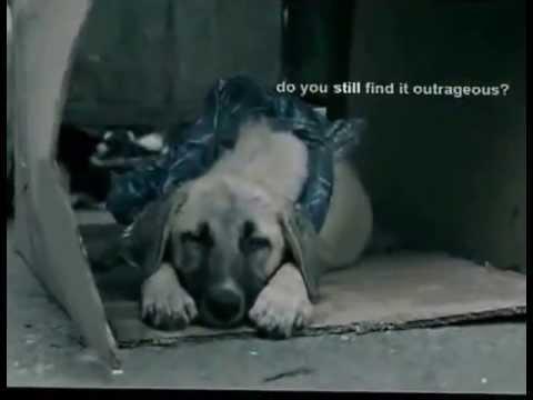 ecco cosa prova un cane randagio - un video che fa riflettere!