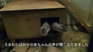 【福岡】キュン死に注意!カワウソファミリーの子育て