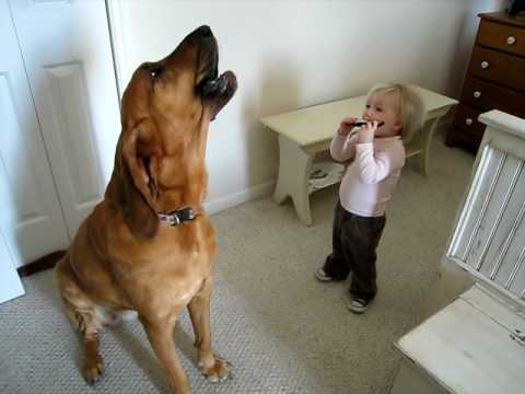 Dog Chimes in to its toddler playing a harmonica