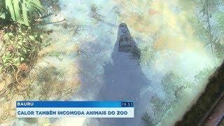 Zoológico de Bauru adota estratégias para os animais se refrescarem no verão