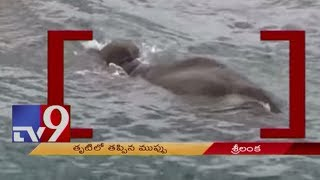 Sri Lankan Navy rescues elephant washed out on sea - TV9