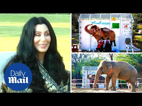 Cher arrives in Pakistan to visit the 'world's loneliest elephant' she helped free