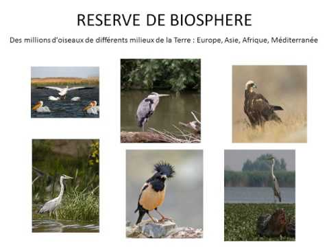 Ce projet a été pensé par nos étudiants en BTS tourisme et fait partie intégrante de leurs études. Ils croisent deux thèmes, à savoir une nouvelle forme de tourisme, les croisières fluviales et l'ECOLOGIE puisque le delta du Danube est une réserve de biosphère reconnue par l'UNESCO en 1992. Cette réserve recouvre la majeure partie du delta du Danube et des limans roumains de la mer Noire situés au sud du delta et protège le milieu, la biodiversité et les pratiques durables. Cette croisière se déroulera avec une compagnie européenne de croisière fluviale qui a un partenariat d'envergure avec l'UNESCO depuis 2006 pour son engagement solidaire. Les étudiants visiteront, au fil de l'eau, les capitales danubiennes emblématiques d'un point de vue historique : Budapest la ville deux fois millénaire, Vienne l'impériale, Bratislava et ses palais baroques.  Il s'agit d'un projet à la fois professionnel, culturel et éco-citoyen.