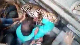 Индусы ловят леопарда