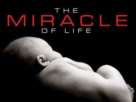 prolife - DOWNLOAD VIDEO HERE: http://www.hyperpixelsmedia.com/sermon-illustration-videos/the-miracle-of-life The Miracle of Life shows us how amazing and wonderful th...