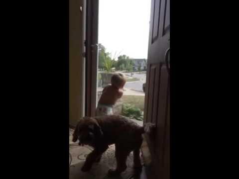 媽媽一說「爸爸回來了」,寶寶和狗狗神同步的反應讓大家都被萌到超開心呢!