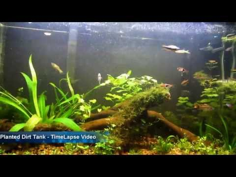 Planted Dirt Tank - Timelapse Video (видео)