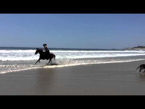 Horseback riding on the beach, are you game?