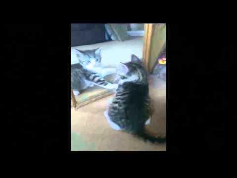 Video clip hài Hài hước với động vật 5
