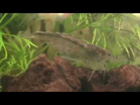 Shrimp Life :)