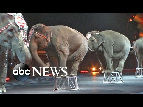 WATCH: Final Performance For Ringling Brothers Elephants