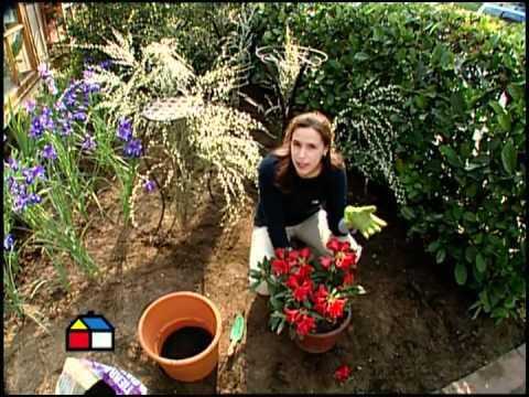 Cómo hacer y planificar un jardín desde el inicio?