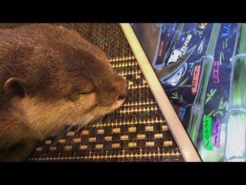 カワウソさくら 7月のエンディング描いた! Otter's illustration in July видео